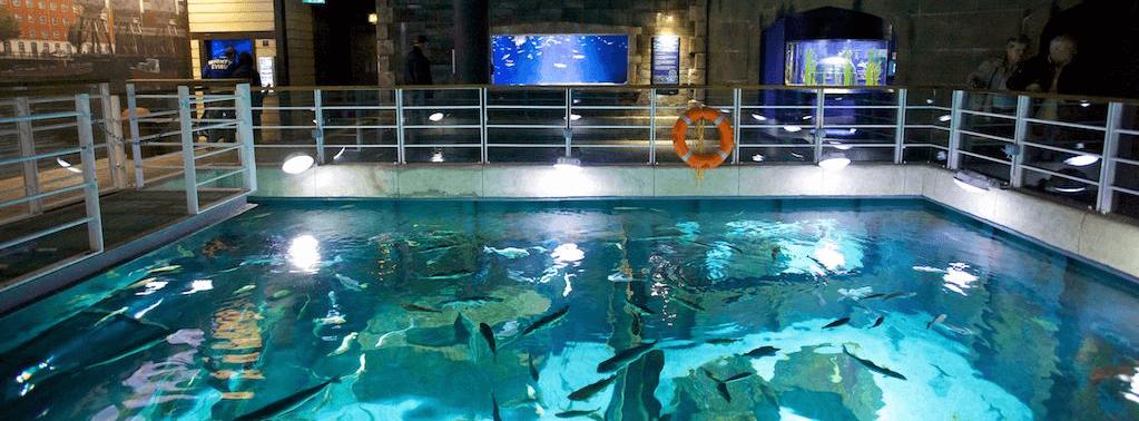 Education at the aquarium bristol aquarium for Discount aquarium fish and reef
