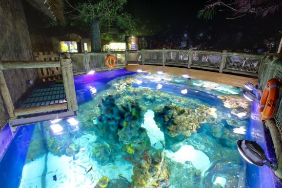 Bristol Aquarium Coral Seas
