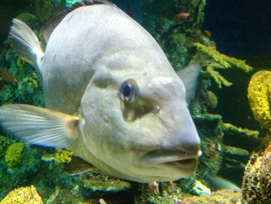 coral-seas-fish