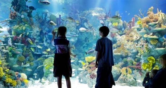 Bristol Aquarium giant viewing window crop_sml