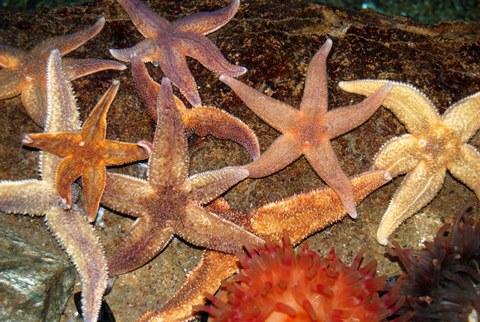 Starfish-stampede-at-Bristol-Aquarium_WEBuse