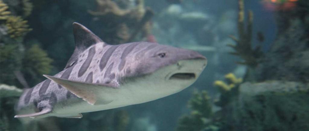 slider-shark