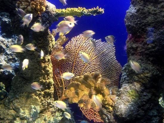 coral seas