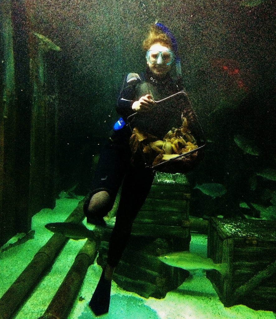 Bristol Aquarium's Liv Orchart collecting shark eggs in a basket from inside the ocean display (1298x1500)
