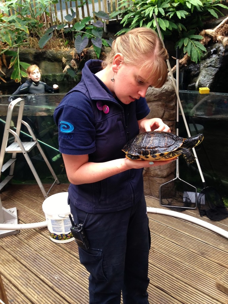 Bristol Aquarium's Olivia Orchart identifying one of the freshwater turtles