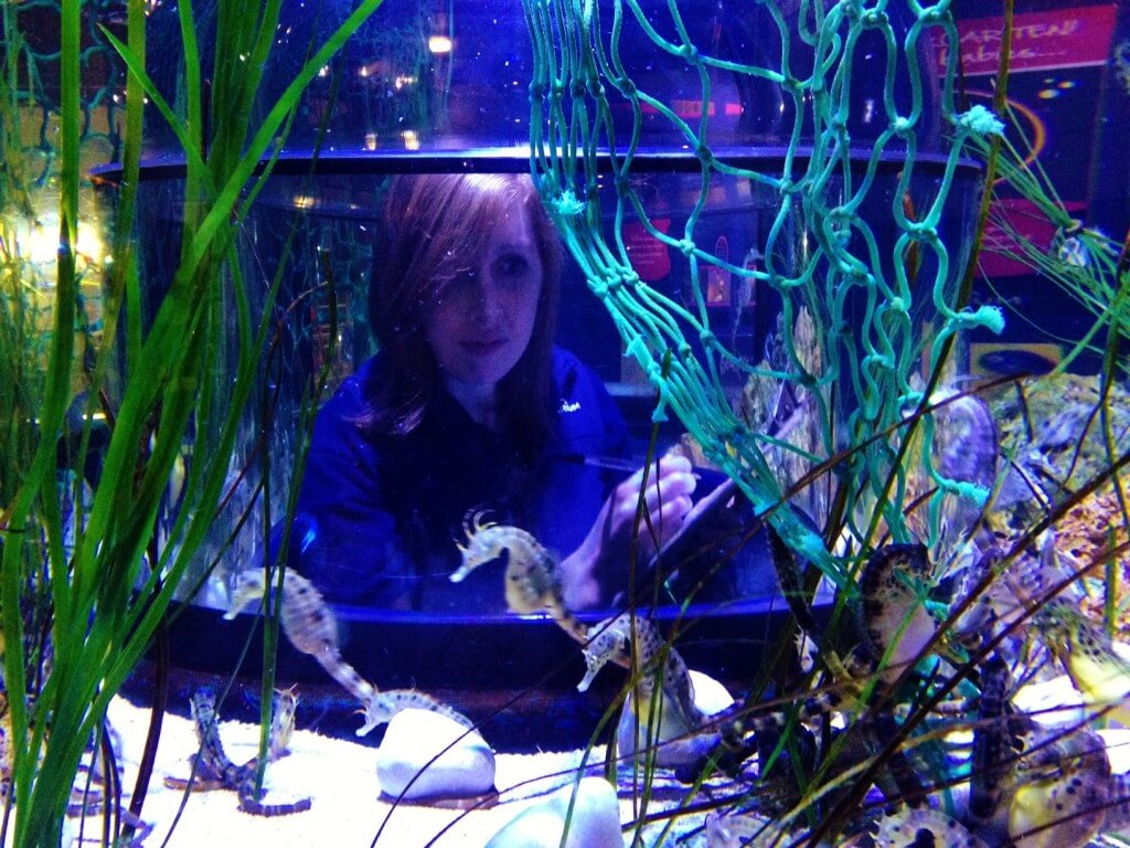 Aquarist Rachel Farquhar counting seahorses
