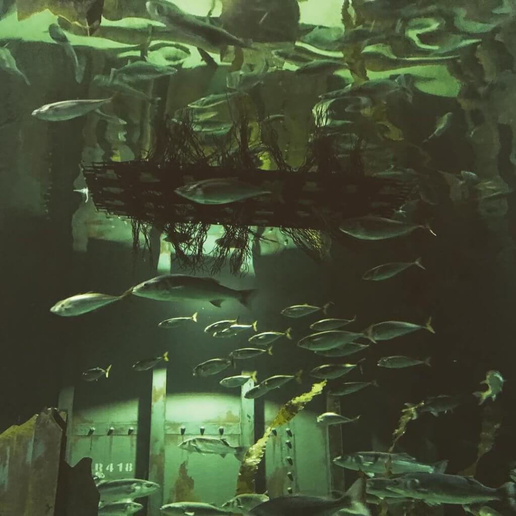 Floating island in Native display at Bristol Aquarium
