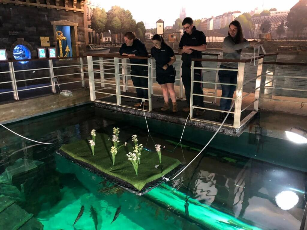 Floating island being added to the Native display at Bristol Aquarium